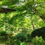 爽やかな季節を感じる青紅葉~京都嵐山・宝厳院~