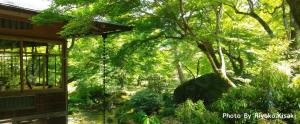 【コラム】爽やかな季節を感じる青紅葉。