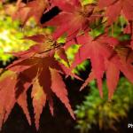 紅葉を訪ねて~2018年京の秋旅~