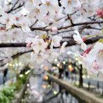 【コラム】京都、観光、公害、箱推し。