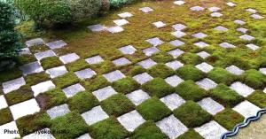 【コラム】ただ、無心になって庭を眺める