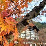 師走の散り紅葉を楽しむ~京都紅葉2019年・其の弐~