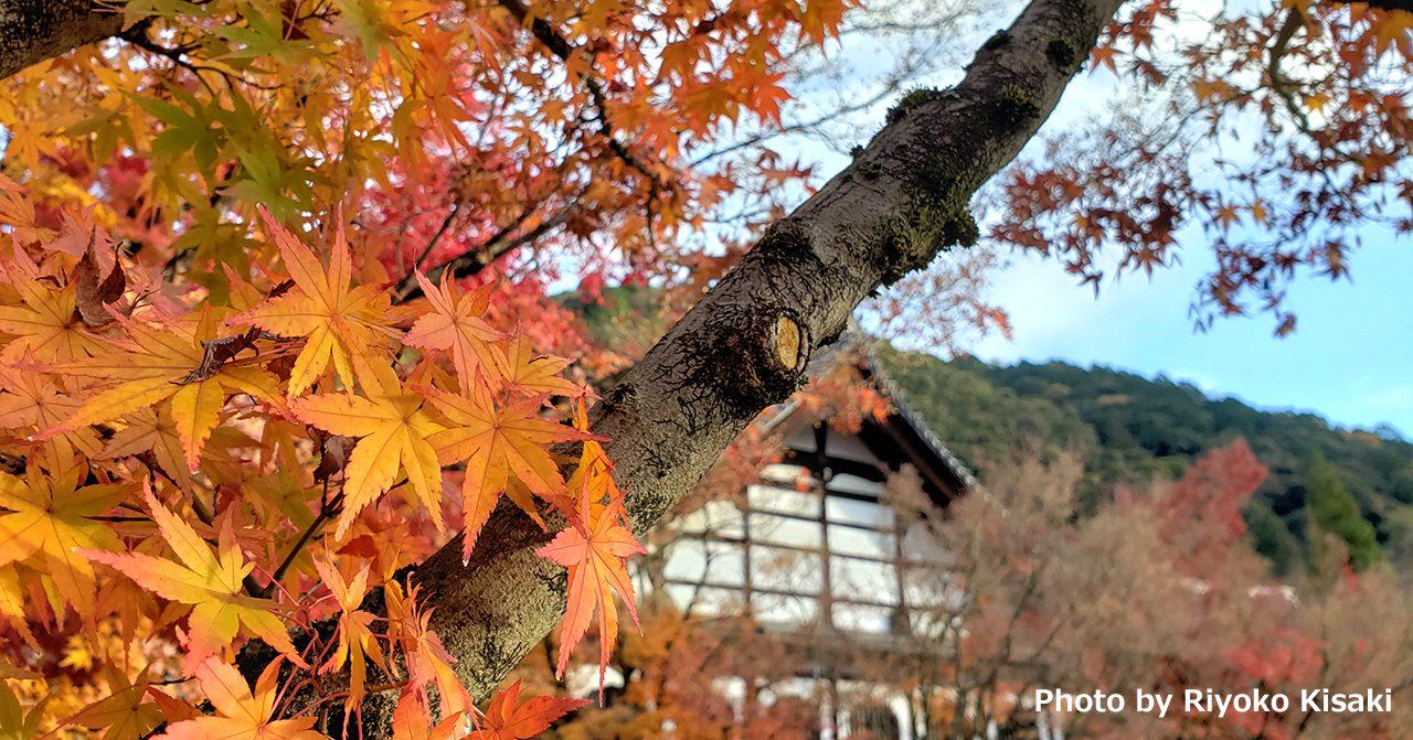 師走の散り紅葉を楽しむ~京都紅葉2019年~